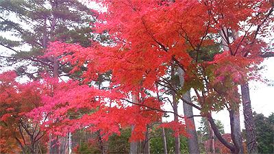 富士見町の秋探索