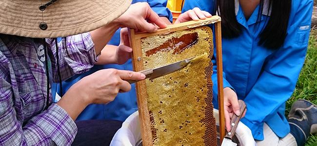 ミツバチの魅力を満喫!~ハチミツ収穫祭 レポート ~