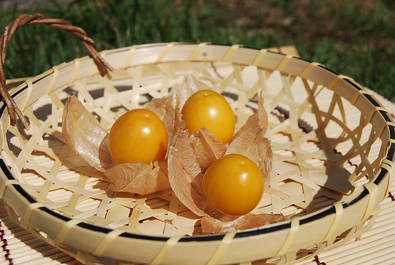 食用ほおずき (長野県富士見町の特産品)